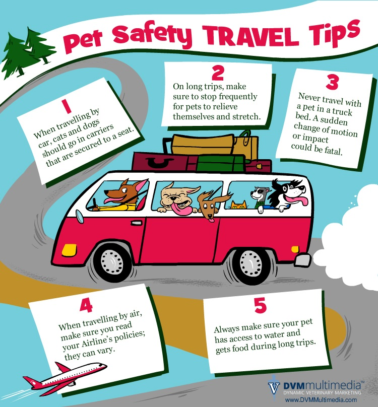 Pet Travel Safety